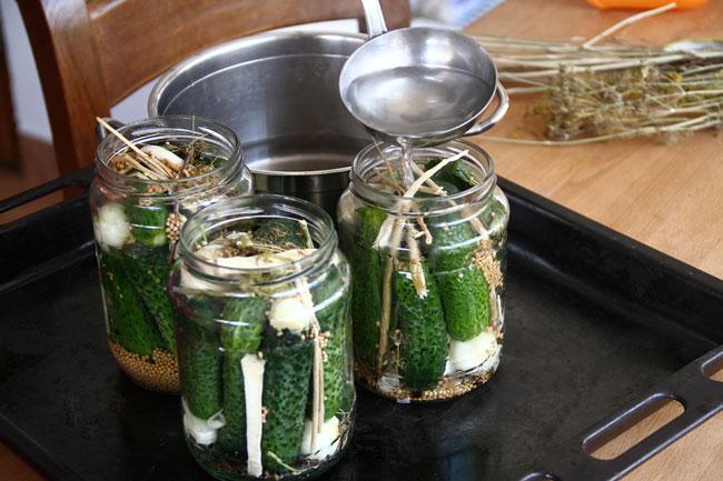 Рецепт маринованных огурцов для начинающих