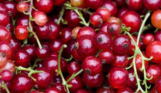 Как правильно выбрать ингредиенты для желе из красной смородины