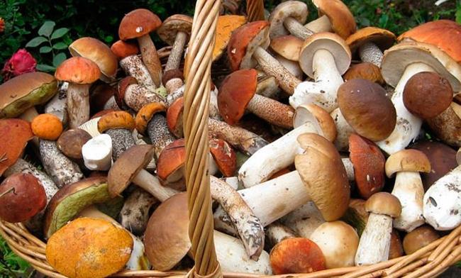 Как сделать правильный выбор грибов для заморозки