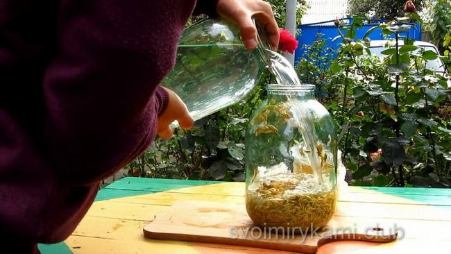 Перед тем как приготовить квас из овса, залейте зерно водой.