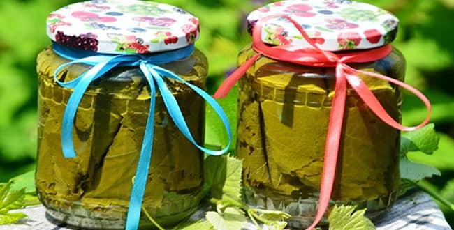 Виноградные листья на зиму 🥝 как подготовить, как мариновать и солить, рецепты